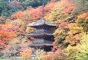 Kongo-in Temple