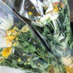 盆花の販売